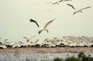 Gemeinsam mit Gleichgesinnten zu neuen Zielen starten! Bildquelle: aboutpixel.de/Vögel im Landeanflug/Sergei Brehm